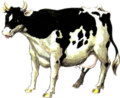 Cow Artwork (Ocarina of Time).png