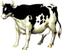 Cow Artwork (Ocarina of Time)