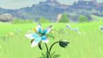Fleur BOTW