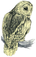 Owl Artwork 2 (Link's Awakening)