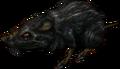 Rat TP