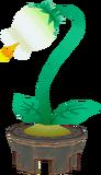 Flor de Pueblo TWW