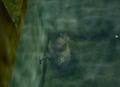 Moblin Underwater.png