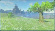 Photo Zelda6 BotW