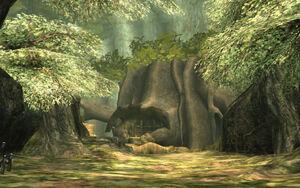 Phirone Wälder TP