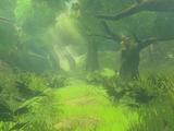 Forêt Korogu