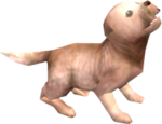 Perro TP