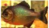 Piranha Borivore MM3D