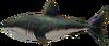 Requin Beliqueux MM3D
