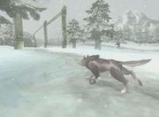 Snowpeak Beta