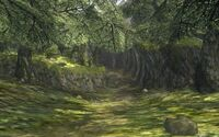 Forêt de Toal