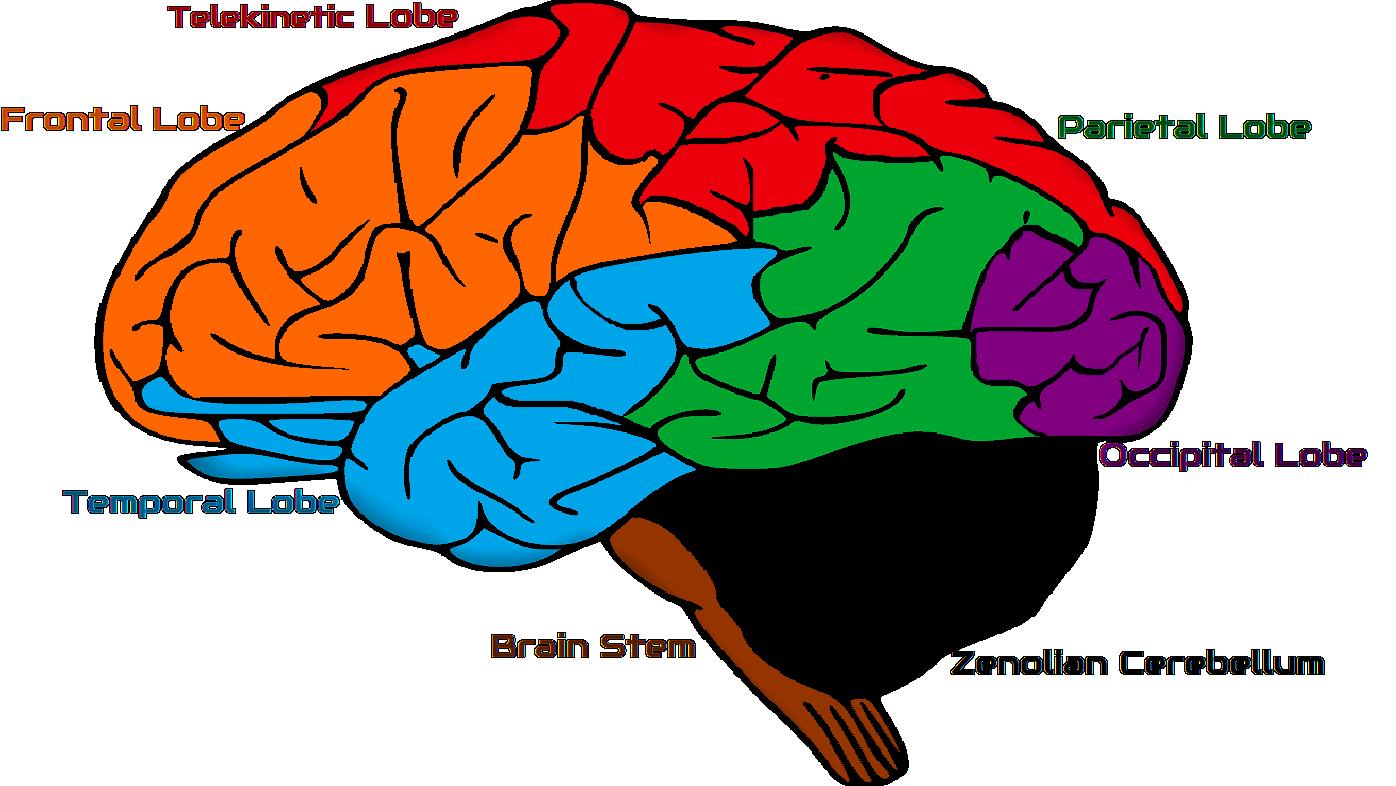 Zenolian Brain | Zenology Wiki | FANDOM powered by Wikia