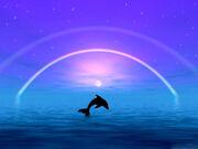 Dolphin-Rainbow-HD