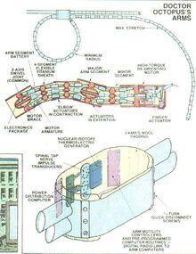 Arms diagram