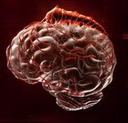 Паразит на мозге