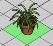 File:Chlorophytum comosum.png