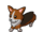 Corgi Pet