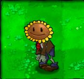 Sunflower Zombie