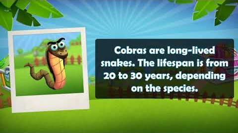 Video - ZooCraft- Fun Facts Time! Vol  9 (Cobra) | ZooCraft