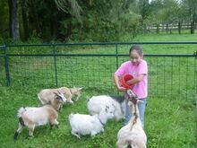 Emma in the Farm