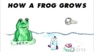 ZOOM Tales How a Frog Grows
