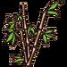 BambooB