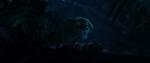 Tiger sees Judy