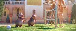 Hippo Giraffe Volleyball