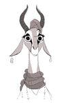 Gazelle6
