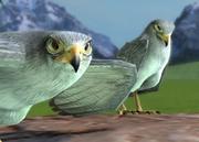 Grey-falcon-ztuac