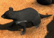 Tasmanian-devil-ztuac
