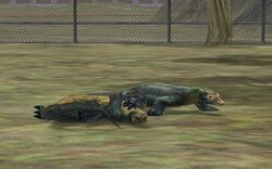 Komodo Dragon couple