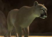 Southern-south-american-cougar-ztuac