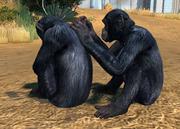 Nigeria-cameroon-chimpanzee-ztuac