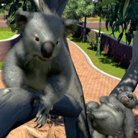 Koala appears in Zoo Tycoon: Ultimate Animal Collection