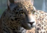 Parana-jaguar-ztuac