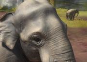 Sumatran-elephant-ztuac