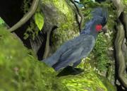 Palm-cockatoo-ztuac