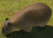 Capybara-ztuac