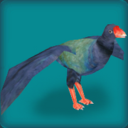 Notornis (also known as the Takahe)