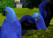 Hyacinth-macaw-ztuac
