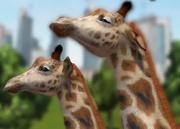 Rothschilds-giraffe-ztuac