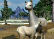 Domestic-llama-ztuac