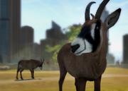 Roan-antelope-ztuac