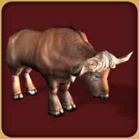 File:African Buffalo.jpg