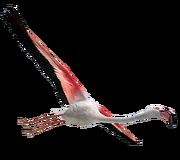 Flamingoc