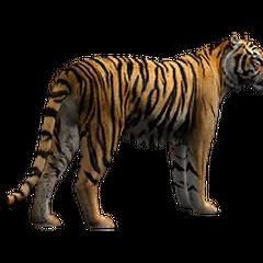 Bengal Tiger remake.