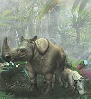 Javan Rhinocerous