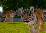 Siberian-tiger-ztuac
