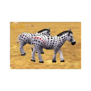 Two Valentine's Day zebra variants.